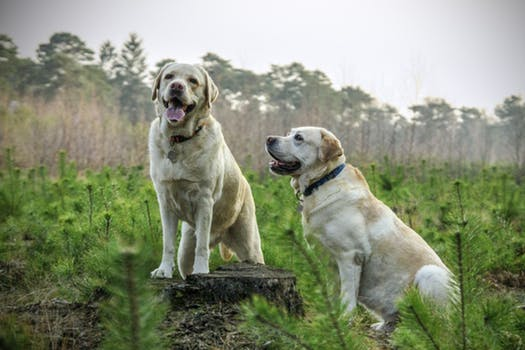 Old Dogs Learn New Tricks